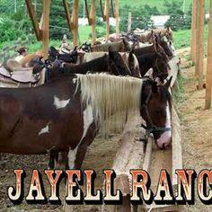 Jayell Ranch has zipline tours, horseback riding, ATV rides, and more.