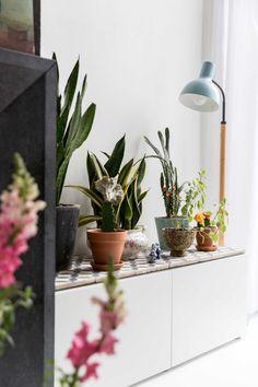 6-plantenverzameling.jpg 722×1,083 pixels