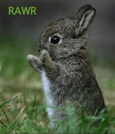 When bunnies attack...