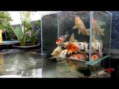 3 Above Water Fish Tanks - YouTube