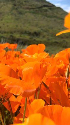 Orange Aesthetic, Nature Aesthetic, Flower Aesthetic, Film Aesthetic, Aesthetic Videos, Aesthetic Backgrounds, Aesthetic Pictures, Aesthetic Photography Grunge, Creative And Aesthetic Development