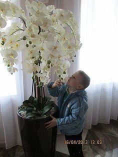 Best 12 Aprenda a cuidar de Phalaenopsis, clique na foto -------------------------------------------------------------------------- falenopsis phalaenopsis orquídea borboleta Orchid Flower Arrangements, Orchid Planters, Orchids Garden, Garden Plants, Exotic Flowers, Beautiful Flowers, White Flowers, Indoor Garden, Indoor Plants