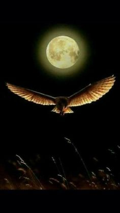 Science Discover Moon and she is frend Beautiful Moon Beautiful Birds Stars Night Moon Shadow Shoot The Moon Moon Photography Moonlight Photography Moon Magic Super Moon Moon Shadow, Stars Night, Stars And Moon, Beautiful Moon, Beautiful Birds, Aigle Animal, Luna Moon, Shoot The Moon, Moon Photography