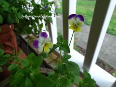 August in the Garden ~ From My Carolina Home