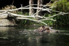 Zoo! by Ryan Pump, via 500px