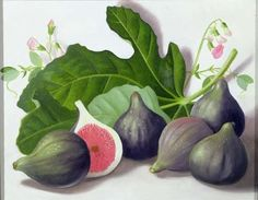 Figs, 2001 Postcards, Greetings Cards, Art Prints, Canvas, Framed Pictures, T-shirts & Wall Art by Lizzie Riches