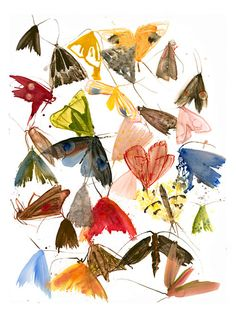 Allyson Reynolds | visualartist.info, moth prints