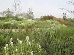 Piet Oudolf, 14 acre private garden, Nantucket Island, Massachusetts, USA. _/\/\/\/\/\_