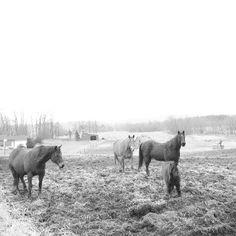 horses in b+w | @meglwitt on Instagram