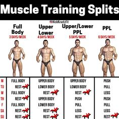 The Essential Multi-joint Exercises & Training Splits That Will Get You Ripped Depending on what truly fits your schedule, lifestyle, & preference, whether you're a beginner or advanced, one of these training options. Gym Workout Chart, Gym Workout Tips, Weight Training Workouts, Workout Schedule, Workout Fitness, Trainer Fitness, Workout Days, Push Pull Workout Routine, Push Pull Legs Workout