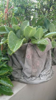 """Shirt container"" made from cement  / #containergardening #cement #greendreams"