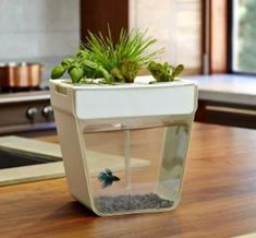 Cool product   plant   fish    I love this product