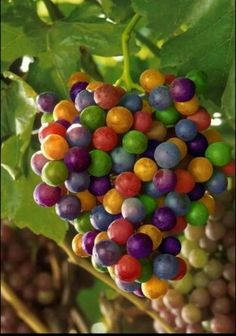 Rainbow grapes... I'm not sure if they really exist but very pretty