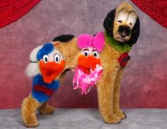 A dog with Disney duck designs is shown in a creative grooming competition in Seacaucus, N.J. (Ren Netherland/Barcroft Media/Landov)