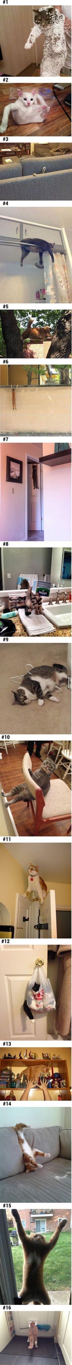 Los lugares y las posiciones fuera de toda lógica de los gatos ... son tan graciosos !!!