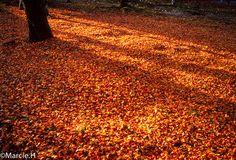 落ち葉   Flickr - Photo Sharing!