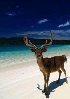 parque nacional pinjante indonesia