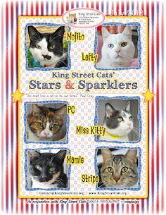 """Check out the latest """"What About Me"""" cats for King Street Cats."""