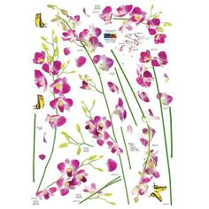 Orchid Tree Branch Stem Flower Butterfly Wall Decal Hyundae Sheet,http://www.amazon.com/dp/B003OXDLQA/ref=cm_sw_r_pi_dp_Kn4ltb0NQP9X2RS3