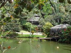 Spirit Vine Ayahuasca Retreat Centre -  Spiritual retreats and sacred plant ayahuasca ceremonies in the heart of the Brazilian rainforest - Itacare, Bahia.  http://spiritvine.net https://www.facebook.com/spiritvinecenter