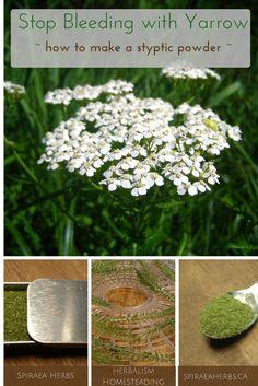 Stop Bleeding with Yarrow - how to make a herbal styptic powder | Spiraea Herbs