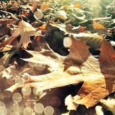 Samhain - Allerheiligen - Allerseelen am 31. Oktober / 1. und 2. November