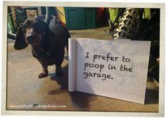 LOL Funny dog!