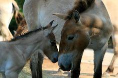 Horses, Animals, Animales, Animaux, Horse, Animal Memes, Animal, Animais, Dieren