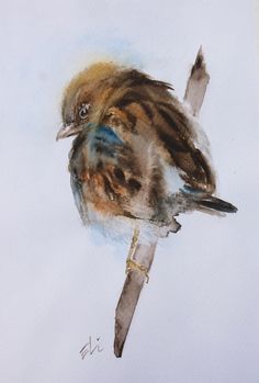 Original Watercolour Painting, Sparrow, Bird Art, Watercolor Birds, Wildlife Illustration by ElisavetaWatercolour on Etsy