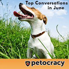 Top Conversations in June | petocracy