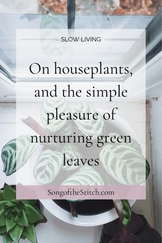 My favourite non-writing activity is potting and propagating houseplants. Read more at SongoftheStitch.com