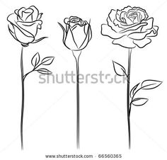 Rose Stock Photos, Rose Stock Photography, Rose Stock Images : Shutterstock.com