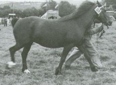 Parc Welsh Maid was born in 1942. She was bay with a star and two white hind fetlocks. She stood at 14.3hh. Her dam was Parc Delight and her sire was Parc Express.