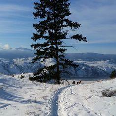 Single track. #trailrunningcanada