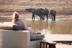 Chinzombo Camp is located in South Luangwa National Park in Zambia. Chinzombo is an exclusive safari camp and offers 6 luxurious tent-style villas with pools. African Tree, African Furniture, Time And Tide, Safari Adventure, Out Of Africa, African Safari, Tourism, Places To Visit, Camping