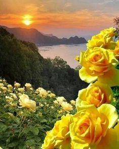 """1,012 """"Μου αρέσει!"""", 19 σχόλια - 135 (@zaahra135) στο Instagram: """"#بسم_الله_الرحمن_الرحيم🌸🌹 خــدایـا  در این روز زیبـا🌾🍃 تمنا دارم درهای مهربانیت را بروی دوستان و…"""" Beautiful Nature Pictures, Beautiful Flowers Wallpapers, Beautiful Nature Wallpaper, Beautiful Artwork, Beautiful Landscapes, Beautiful Rose Flowers, Beautiful Birds, Beautiful Gardens, Planting Poppies"""