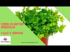 COMO PLANTAR SALSINHA(CHEIRO VERDE) BEM FÁCIL - YouTube