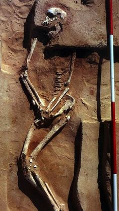 Discovered in a dry lake bed in southeastern Australia in 1970, the 43,000-year-old skeleton known as Mungo Man is the oldest known Australian. Since being found, his remains have been kept at Australian National University, and they are no longer being studied. Now Aboriginal groups are negotiating with officials for the return of the remains to Lake Mungo National Park, where they would be reunited with the 20,000-year-old skeleton dubbed Mungo Lady who was uncovered not far from Mungo…