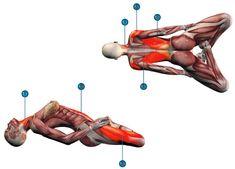 Yoga Fitness, Health Fitness, Anatomy Models, Body Anatomy, Workout Plan For Women, Asana, Excercise, Yoga Poses, Sport