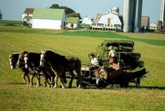 Amish - Off The Grid Secrets of the Amish (See attached Article)