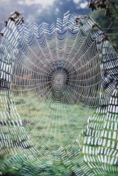 If I had a picture of prey stuck in a web, this would be it.