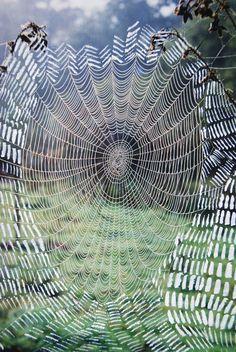 Spiderweb...