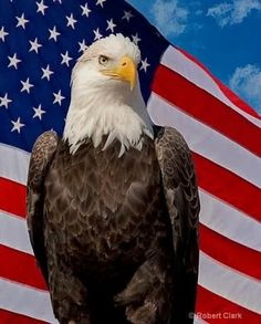 American Flag Pictures, Patriotic Pictures, Eagle Pictures, Pray For America, I Love America, God Bless America, Americana Bedroom, Roman Reigns Wwe Champion, American Freedom