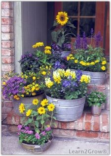 Container gardens with purple and yellow flowers