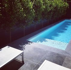 Ficus 'flash' lining fence with narrow pool - side of house No Grass Backyard, Small Backyard Pools, Small Pools, Swimming Pools Backyard, Swimming Pool Designs, Outdoor Pool, Backyard Landscaping, Garden Grass, Pool Landscape Design