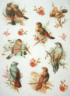Rice Paper for Decoupage Decopatch Scrapbook Craft Sheet Vintage Group of Birds