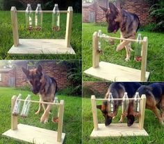 Plastic Bottle Game for Dogs