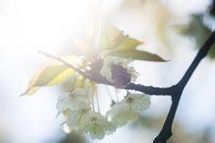 Le Poesie der Sandrone: L' ARBERO E L'APE