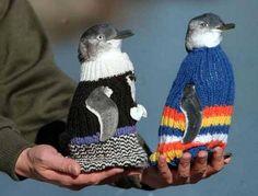 este hombre teje sueteres para pinguinos 5