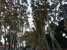 Trees: Gülhane Parkı Istanbul'da